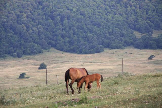 Armenië: beklim Mt. Armaghan te paard
