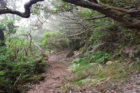 Madeira: Private Vereda do Fanal Walk