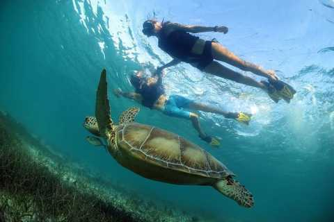 Cancún / Playa del Carmen: tour de snorkel en tortugas y cenotes