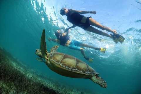Cancun/Playa del Carmen: Turtles & Cenote Snorkeling Tour