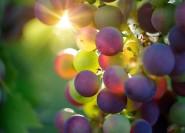 Von Mailand bis Franciacorta Weinprobe