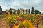 From Avignon: Wine Tasting Session with a Winemaker