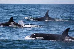Lagos: Observação de Golfinhos e Vida Marinha