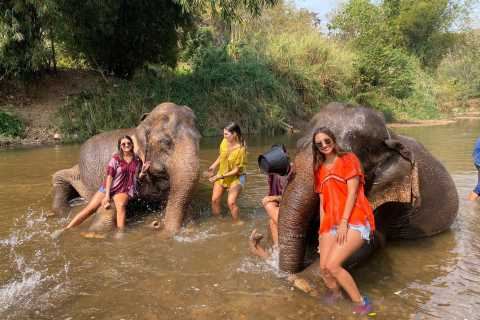 Chiang Mai: Private Elephant Sanctuary and Waterfall Tour