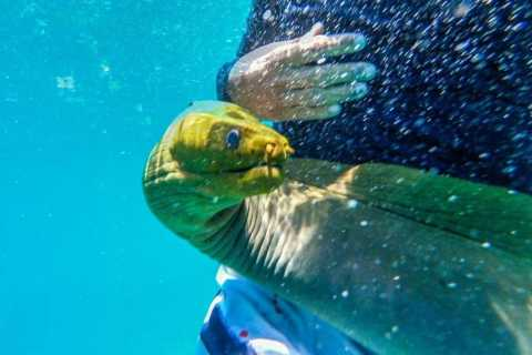 Caye Caulker: Local Reef Half-Day 3-Stop Snorkeling Tour