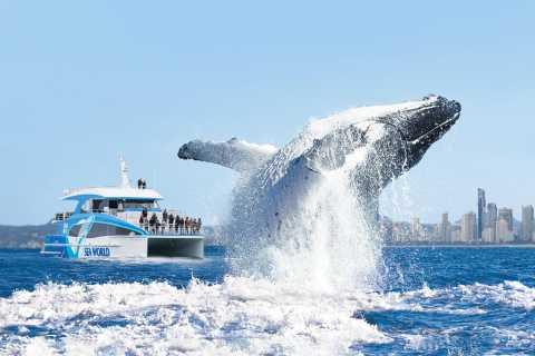 Gold Coast: Cruzeiro de Observação de Baleias do Porto do Mar do Mundo
