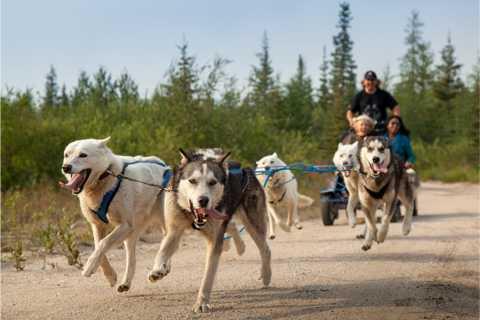De Rovaniemi: aventure de safari en husky d'automne