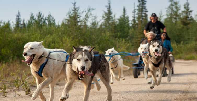 From Rovaniemi: Autumn Husky Safari Adventure