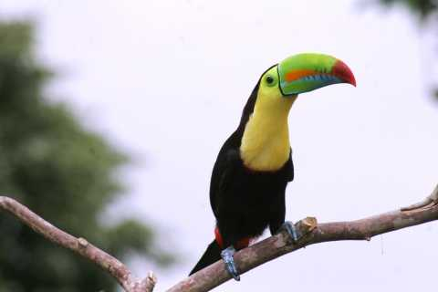 Arenal Forest: Bird Observation & Photography Tour