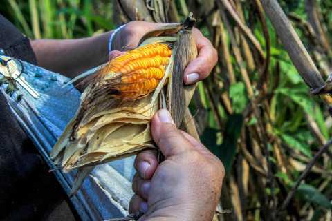 From Mérida: Farming, Cenote, and Ek Balam Pyramids Tour