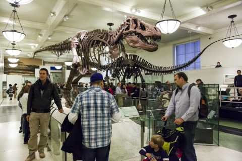 New York: American Museum of Natural History Family Tour