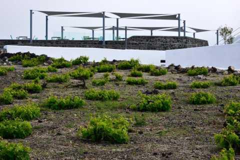 Santorini: Private Sunset Wine Tour