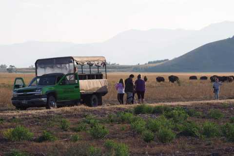 Parque Nacional de Grand Teton: safari de animales salvajes