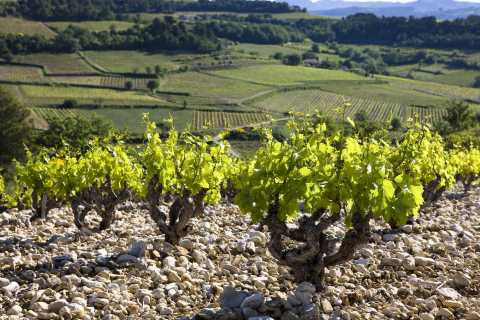 From Avignon: Full-Day History and Tasting in Alain Jaume