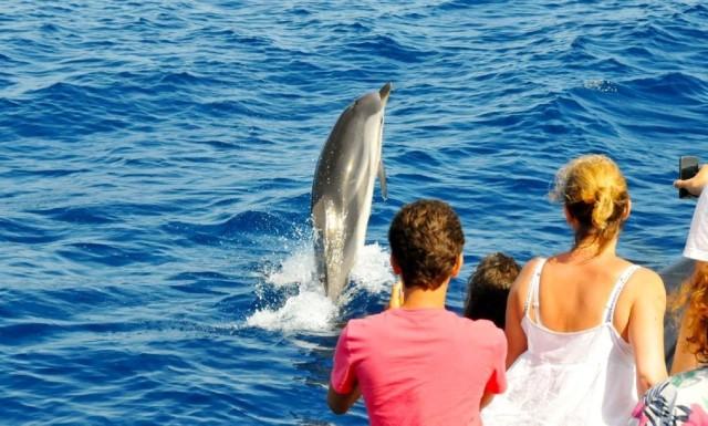 Van Muscat: Dolphin Watching Tour