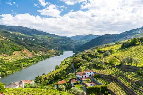 Porto: Douro Valley Tour with Wine Tasting, Cruise and Lunch