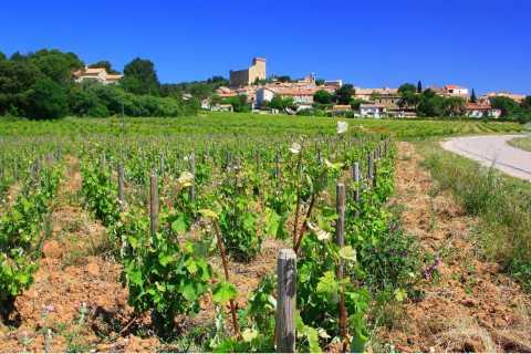 Avignon: Full-Day Wine Tour around Châteauneuf-du-Pape