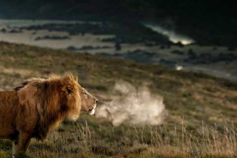 Port Elizabeth: 2-daagse safari Addo Elephant Nationaal Park