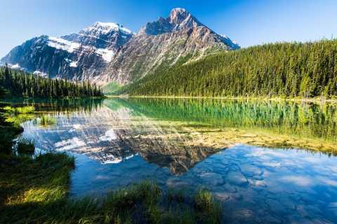 From Jasper: Half-Day Private Tour of Jasper National Park