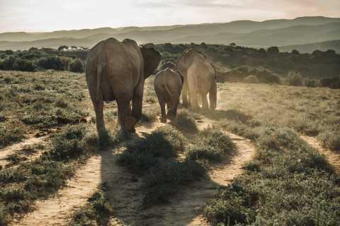 Safari de día en el parque nacional de elefantes Addo