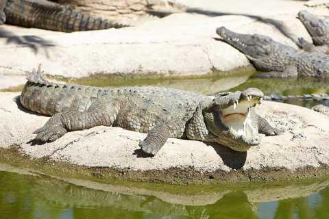 Torremolinos: entrada al parque de cocodrilos