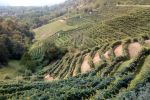 From Venice: Half-Day Prosecco Winery Tour