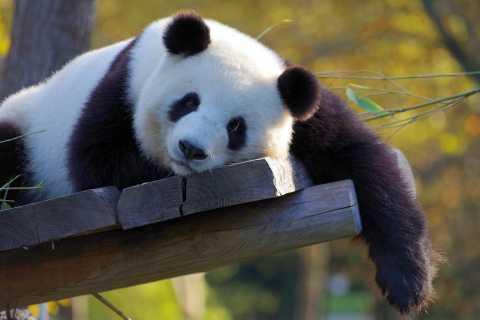 Taipei: biglietto combinato per la funivia Maokong e lo zoo di Taipei