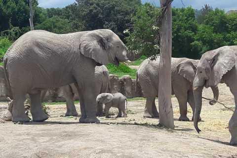 From Puebla: 5-Hour Africam Safari Private Tour