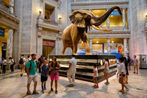 Washington DC: Museum of Natural History Tour for Families