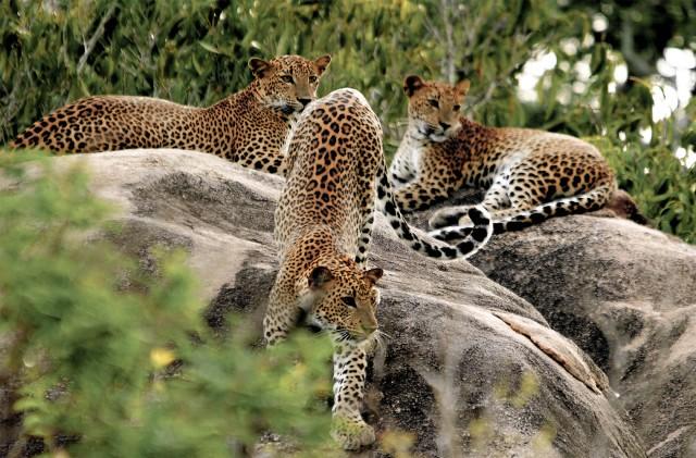 Sri Lanka: privésafari in het Yala National Park