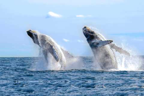 Cabo San Lucas: Luxury Catamaran Whale Watching Experience
