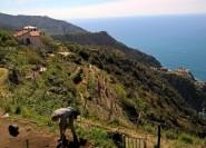 Cinque Terre: Halbtägiges Wandererlebnis