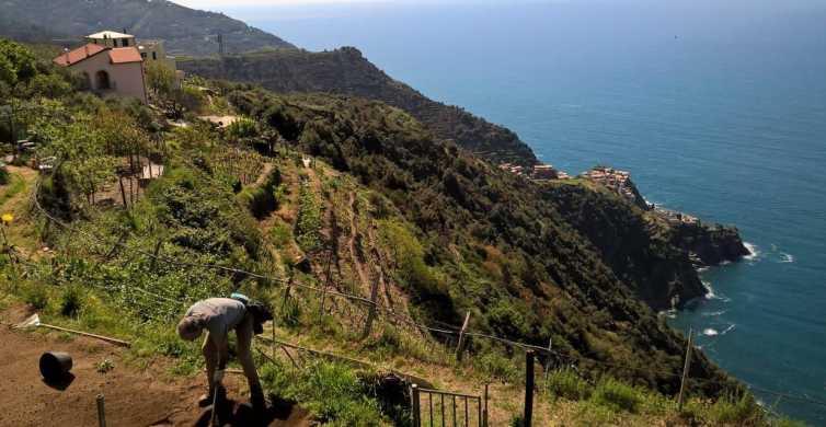 Cinque Terre: Half-Day Hiking Experience