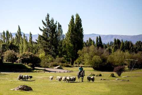 El Calafate: Day-Tour to Estancia 25 de Mayo with Meal