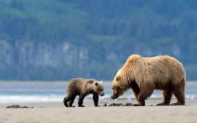 Alaska: 7-Day Brown Bear and Denali National Park Adventure
