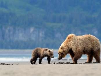 Alaska: 7-tägiges Abenteuer mit Braunbären und Denali-Nationalpark