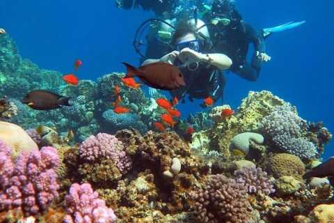 Dahab: Quad Biking, Snorkelling, Diving, and Camel Ride