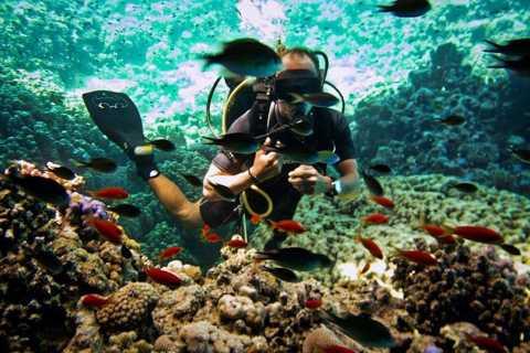 From Sharm or Dahab: Blue Hole & Canyon Sea Dive Experience