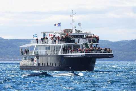 Tadoussac or Baie-Sainte-Catherine: Whale Watching Cruise