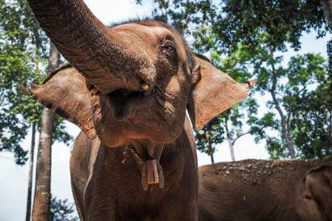 Chiang Mai: Elephant Sanctuary Guided Tour in Spanish