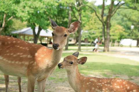 From Kyoto: Nara Heritage Half-Day Tour