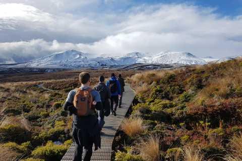 Tongariro: Volcanic Explorer Half-Day Guided Walk