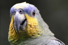 Belém: Excursão de observação de pássaros na Ilha dos Papagaios