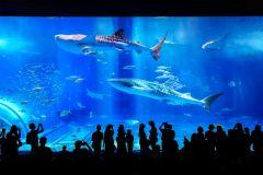 Naha: excursão turística ao norte de Okinawa e aquário de Churaumi