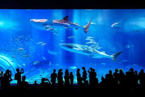 Naha: North Okinawa Sightseeing Tour & Churaumi Aquarium