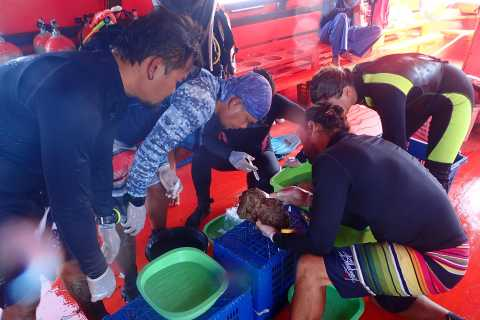 Koh Chang: Coral Cultivation Workshop with Lunch & Transfer
