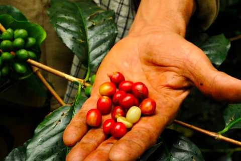 Bogotá: Colombian Coffee Tour with Farm Visit and Tastings