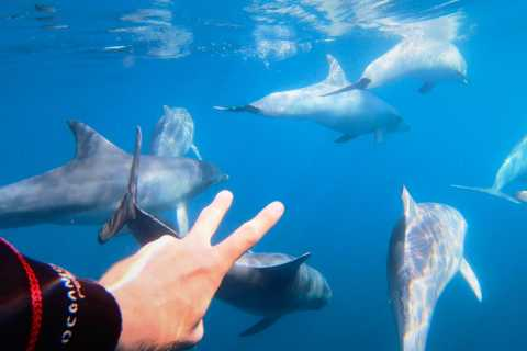 Adelaide: 3.5-Hour Swimming with Dolphins Experience