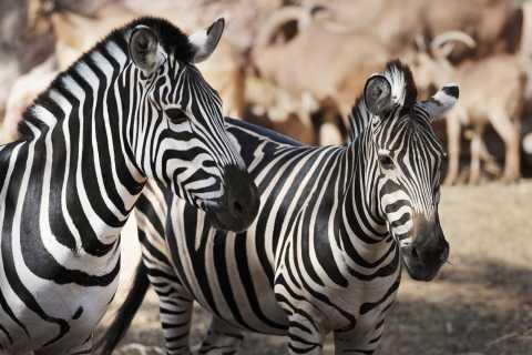Fuerteventura: Ticket für den Oasis-Tierpark