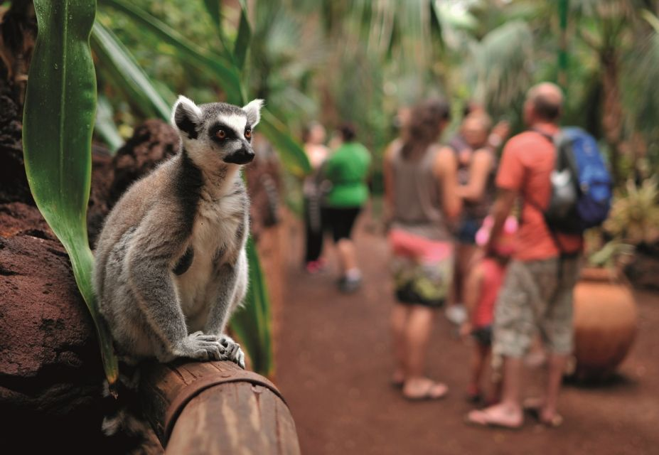 Bilet wstępu do Oasis Wildlife Fuerteventura
